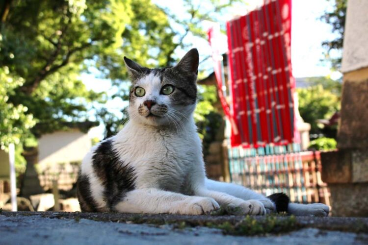 龍泉寺の猫